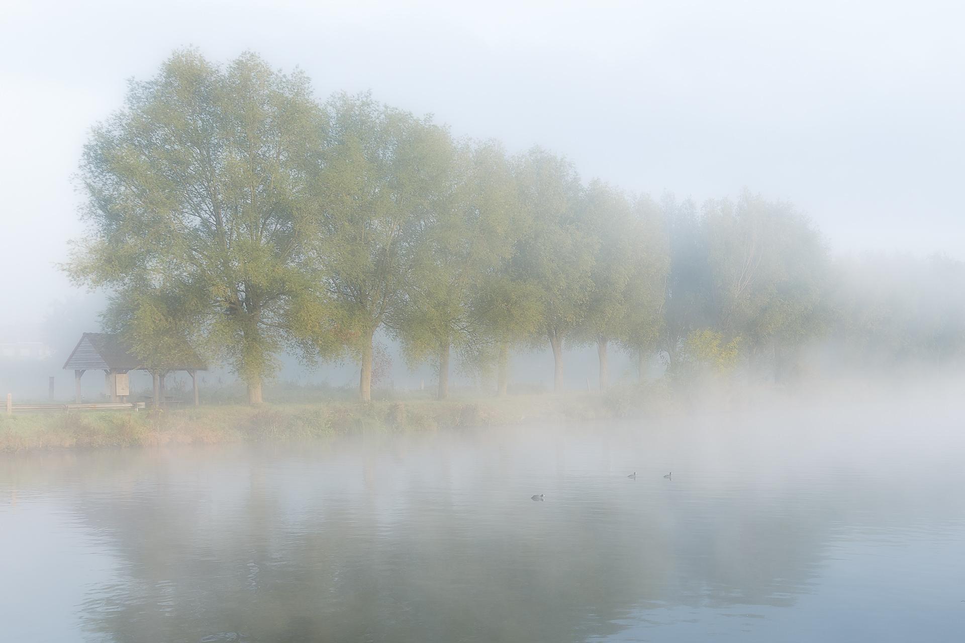 een mistige ochtend langs de Leie in Kortrijk